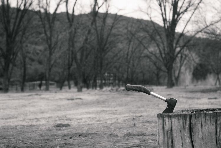 Axe on tree stump at field