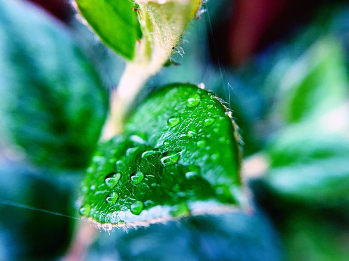 After The Rain Green Color Plant Plant Part Leaf Growth Close-up Nature No People Water Drop Selective Focus Outdoors Day Wet Beauty In Nature Freshness Fragility Focus On Foreground The Great Outdoors - 2018 EyeEm Awards