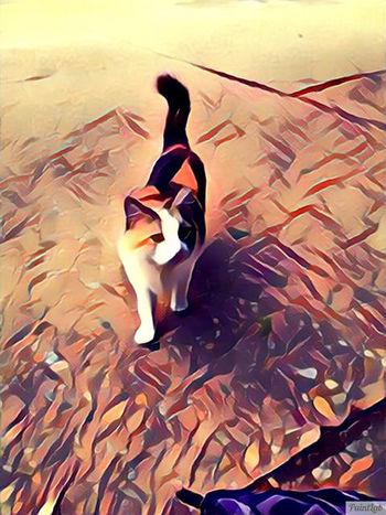 Cat Eyeemphoto EyeEm Cats Of EyeEm EyeEm Gallery EyeEmNewHere Leiblingsteil Cat♡ Arts Culture And Entertainment Art Gallery Cats 🐱 Cartoon Pic Cartooneffect Cartoonphoto