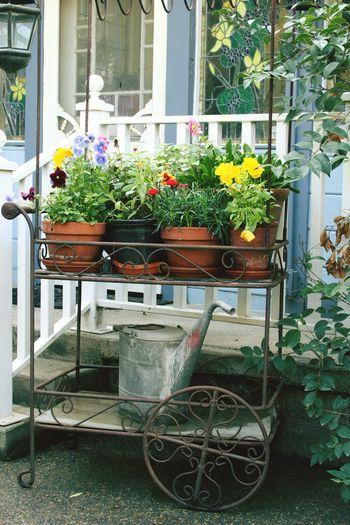 Wateringcan Flowercart Spring Colors Porch Terracotta Claypot