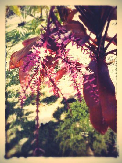 Que a vida seja simples e bela como uma flor. Hello World