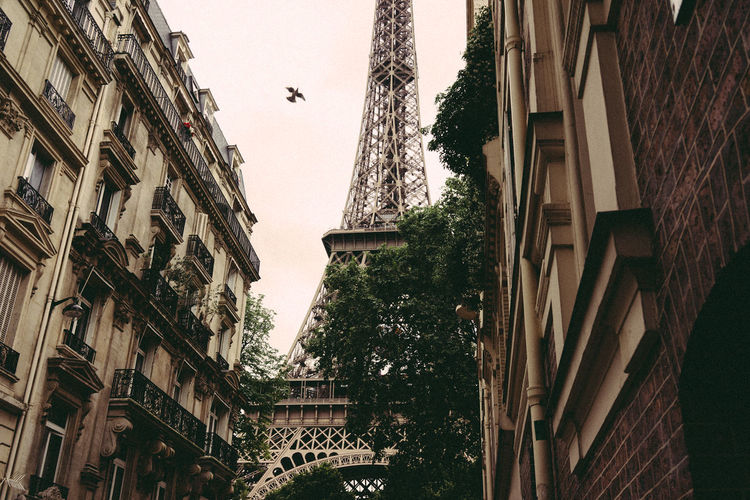Eiffel Tower Paris Architecture Bird Building Exterior Built Structure City Clear Sky Day French Low Angle View No People Old Buildings Outdoors Sky Street Tree