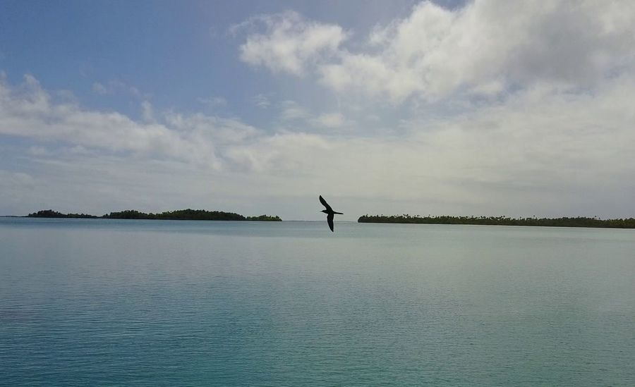 Outdoors Landscape Horizon Over Water Beauty In Nature High Angle View Island French Polynesia Beauty In Nature Cloud - Sky Vacations Animal Themes Bird Nature No People Animals In The Wild