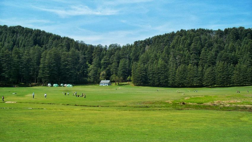 Khajjiar field Tree Green Color EyeEm Beauty In Nature Nature Grass Outdoors Pine Tree Beauty In Nature Lush - Description Grazing Landscape Scenics Group Of Animals Day Nature Photography Tranquil Scene Khajjiar . India Khajjiar Khajjiarlake Pinaceae Nature Tranquility Forest Tree