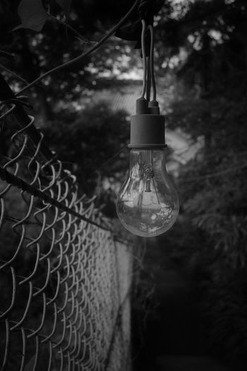 Chainlink Fence Hanging Focus On Foreground No People Close-up Tree Lighting Equipment Outdoors Light Bulb Light