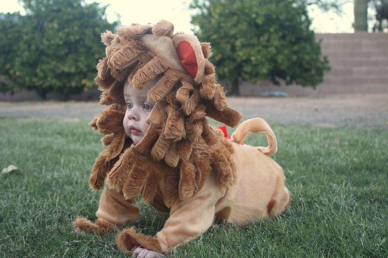 Cute baby girl wearing costume kneeling on land