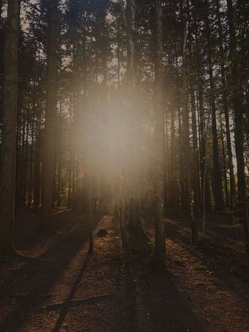 The light at the end of a dark place. Forest Tree Nature Tree Trunk Tranquility Tranquil Scene Scenics Beauty In Nature Landscape Growth WoodLand Day Outdoors No People Sunlight Sky EyeEmNewHere Devon Beauty In Nature