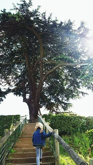 Tree Rear View One Person Casual Clothing Day Human Body Part Childhood Stairs Enjoy Life Caen Cèdre Du Liban Normandy France Tranquility France Photos Girl Outdoors EyeEm Selects