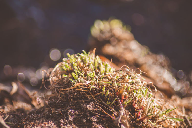 Selective Focus Nature Plant Close-up No People Growth Day Land Tranquility Focus On Foreground Beauty In Nature Field Outdoors Sunlight Beginnings Green Color Freshness Moss Plant Part New Life EyeEm Macro Collection Vintage