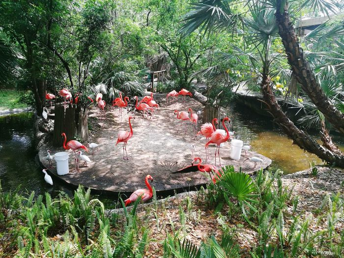 Tampa Beauty In Nature Nature Outdoors Lowry Park Zoo Vacation Time ♡ Beautiful Day