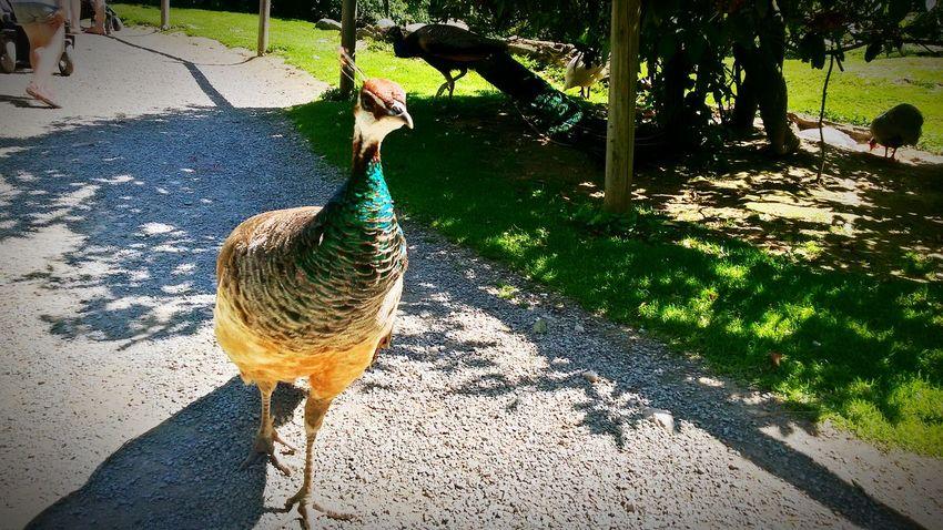 *-* Natur Schönes Wetter Nature Tierpark Strauss