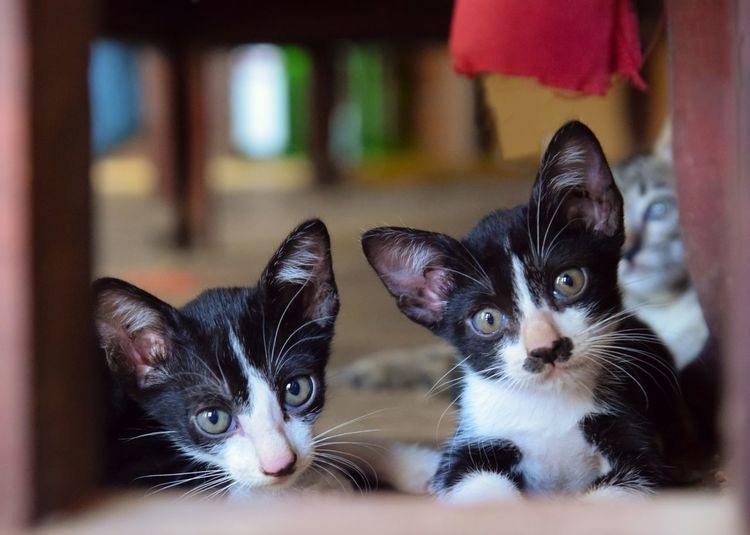 cute two Baby cat on the window Looking At Camera Animal Lovely Natural Beautiful Cute Close-up Wildlife Pets Kitten Portrait Looking At Camera Domestic Cat Cute Togetherness Young Animal Puppy Whisker Ear Animal Eye Siamese Cat Cat Yellow Eyes Eye