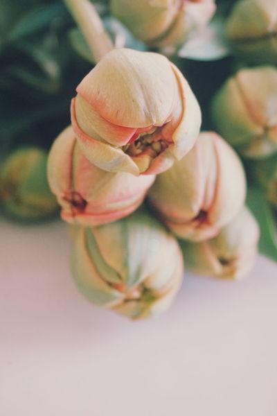 tulips looks like pionies Tulip Tulip Pastel Power Pastel Power Pastel Colors Flower Flower Head Spring Spring Flowers Dried Fruit Nut - Food Close-up Food And Drink Flower Head Almond Tree Pink