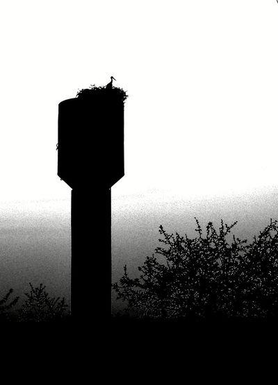 аисты вечерняяпрогулка вечер Bird