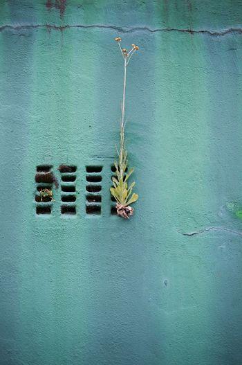 Flower Growing In Grate On Wall