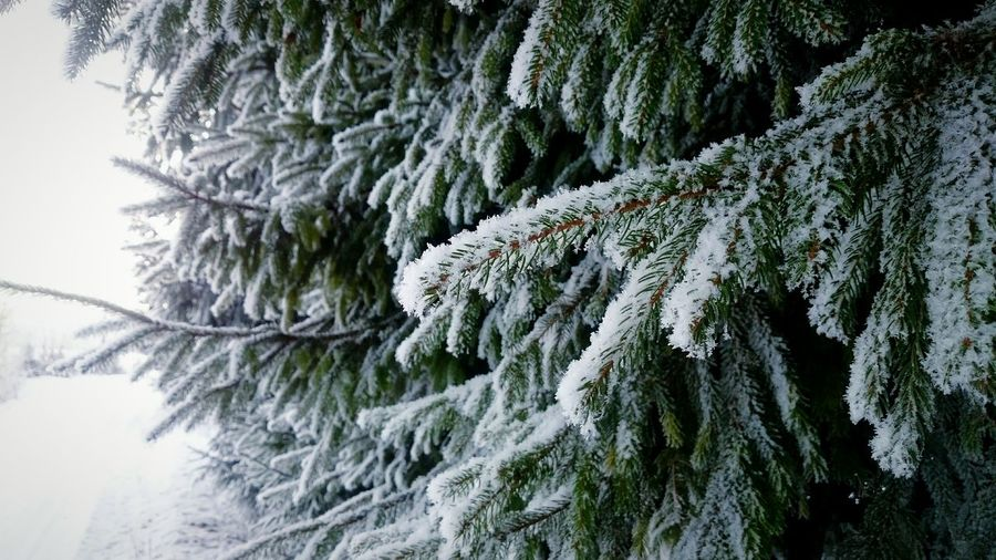 Winter Cold Christmas Tree Snow Snowy Forset Mist Trees Covered With Snow White www.youtube.com/dasltufilms