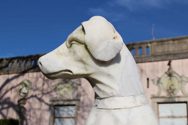 Close-Up Of Dog Statue At Palacio Do Marques De Pombal