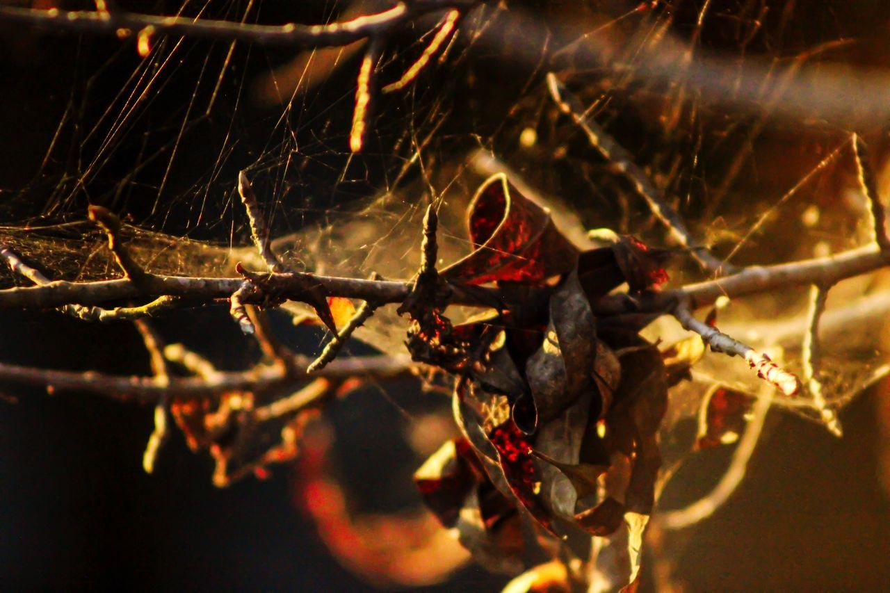 close-up, spider web, no people, one animal, animal themes, night, outdoors, animals in the wild, nature