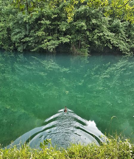 Duck River Lake View Duck Swiming Pliva, Jajce, BiH Nature Waterfront Water Water Swimming UnderSea Swimming Pool Underwater Lake Sea Life High Angle View Reflection Tree Floating On Water Floating Calm Water Plant