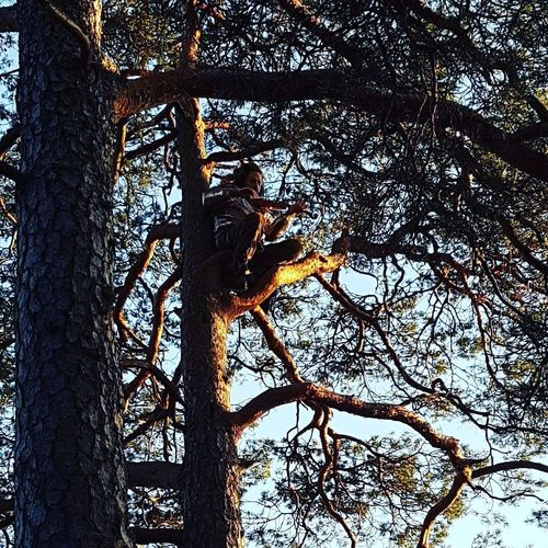 Musician in a treea Alby  Nature Performance Magic Violinist Tree Musician Sweden Forest Outdoors Circusperformer