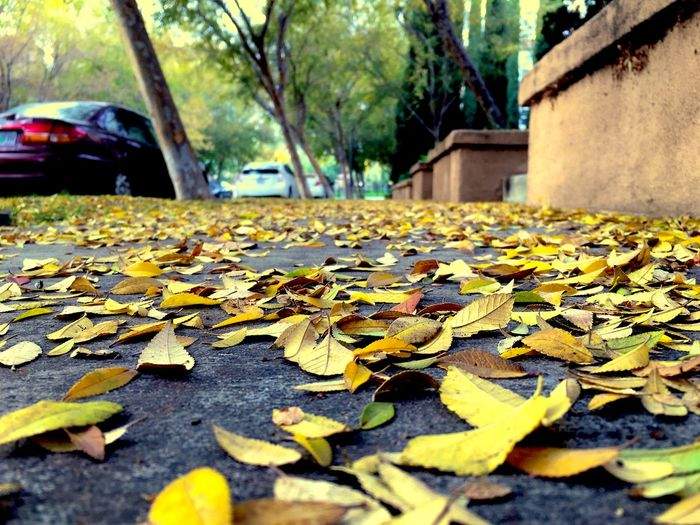 Fallen leaves on road