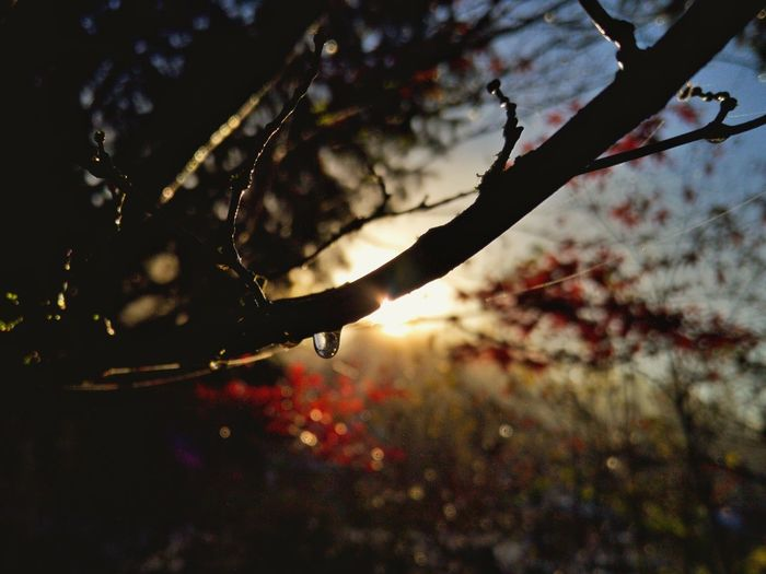 Warm Warmth Warm Colours Nature Morning Sunshine Glare Sunrise Natural Beauty EyeEm Nature Lover Nature Photography Depth Water Droplets Trees Magick Glow Light And Shadow Silhouette Depth Of Field Naturelovers Bokeh Illumination Bright