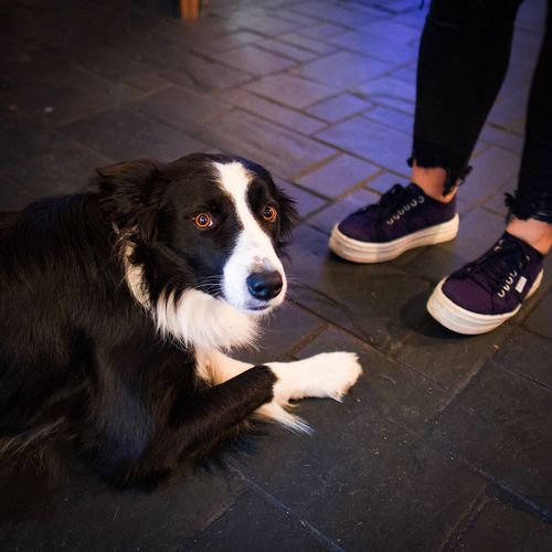 Good boy Mammal One Animal Pets Domestic Animals Domestic Dog Canine Vertebrate Low Section Human Leg Body Part Shoe Human Body Part High Angle View People Day Standing Street Pet Owner Human Foot