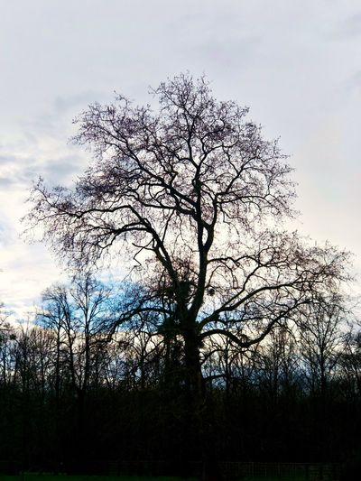 Plant Tree Sky Silhouette Growth Low Angle View No People Beauty In Nature Nature Tranquility Branch Outdoors Tranquil Scene Day Scenics - Nature Idyllic Non-urban Scene Land Bare Tree Cloud - Sky