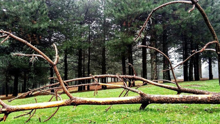 Tree Park - Man Made Space Playground Sky Grass
