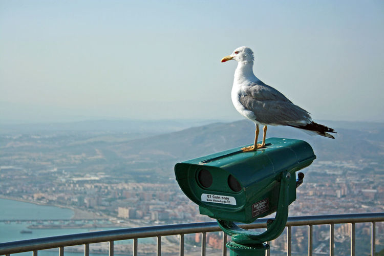 A single seagull perched on binoculars at the top of the Rock of Gibraltar Animal Themes Animal Wildlife Animals In The Wild Bird Close-up Focus On Foreground Gibraltar Gibraltar And Sea Gibraltar Upper Rock Gibraltar Views Gibraltarview One Animal One Seagull Perched Perched Bird Perched Birds Perching Sea Seagull Seagull And Clear Sky Seagull Perched On Manmade Object Seagull Serenity Seagulls And Sea Single Seagull Sky