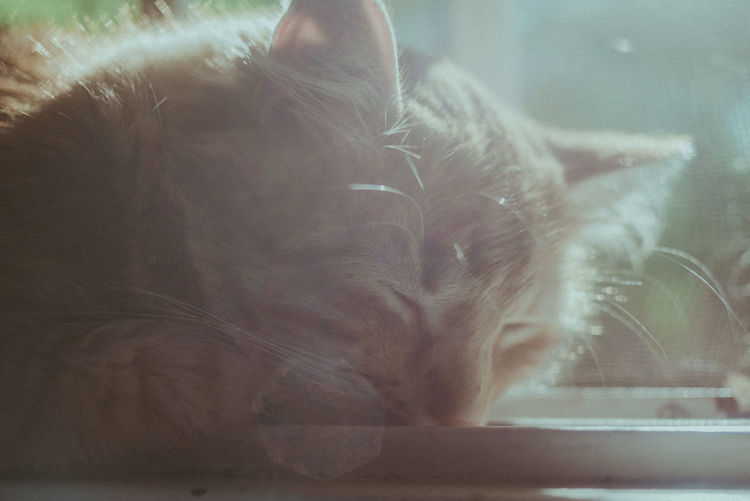 Domestic Pets Cat Mammal Domestic Cat Domestic Animals Feline Animal Animal Themes One Animal Vertebrate Close-up Indoors  No People Relaxation Whisker Window Glass - Material Sleeping Day Animal Head