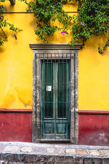 Paint The Town Yellow Architecture Building Exterior Built Structure Day Door Flower Growth House No People Outdoors Plant Window Yellow