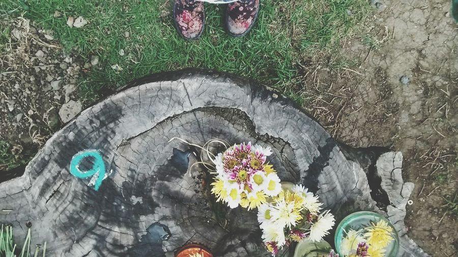 Flowers :) Lila Drmartens Lugarfavorito Traveling Purple ♥