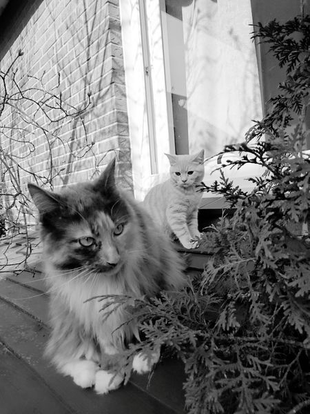 Pets Domestic Cat One Animal Mammal Domestic Animals Animal Themes Looking At Camera Portrait Feline No People Indoors  Day Radiator Sunnyday☀️ Neu Wulmstorf Meisterweg Beauty In Nature Blackandwhite Close-up DukeTheTomcat Monochrome Photography MarieTheCat Looking To The Other Side Animal Eye Animals In The Wild