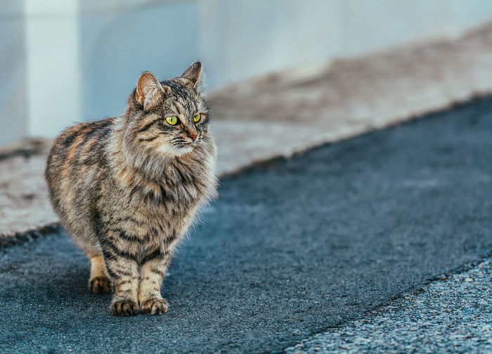 Animal Themes Cat Close-up Day Domestic Animals Domestic Cat Feline Mammal No People One Animal Outdoors Pets Whisker
