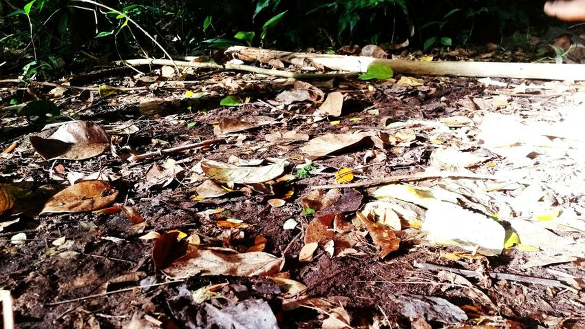 Outdoors Nature River Fallen Leaves Ground Floor