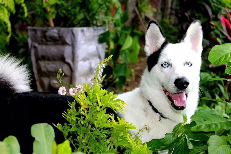 Sled perro malo !!!! XD Dog Animals Hello World My Friend's Dog