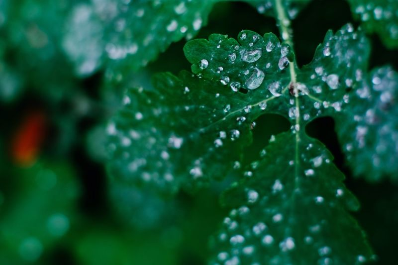 Rainy days Drop Water Wet Plant Growth Beauty In Nature Green Color Close-up Leaf Plant Part Selective Focus Nature No People Freshness Vulnerability  Day Focus On Foreground Fragility Outdoors