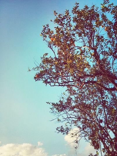 Sky Trees High