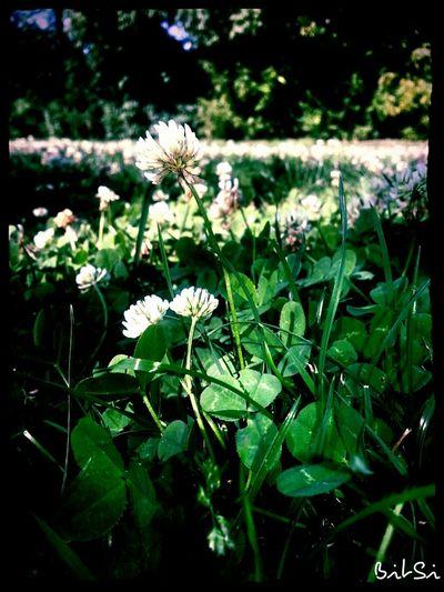 Flowerporn Wildflowers Blumenmeer