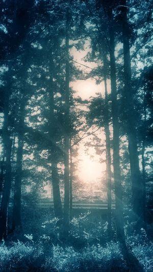 Aroundtheworldbylufthansa EyeEm Nature Lover Sun_collection
