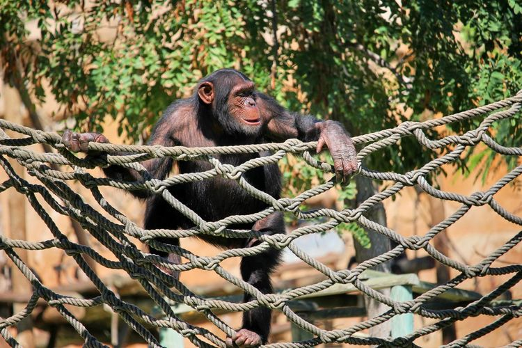 Close-up of monkey on tree at zoo