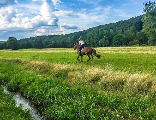 Black Forest scenery 🏇💚 Horserider Horse Creek Brook Meadow Green Grass Forest Trees EyeEm Best Shots - Nature EyeEm Nature Lover Nature_collection Nature Photography Beauty In Nature Schwarzwald Blackforest Beautiful Nature Mountain Landscape