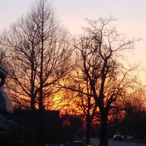 Low angle view of silhouette bare trees against sky at sunset