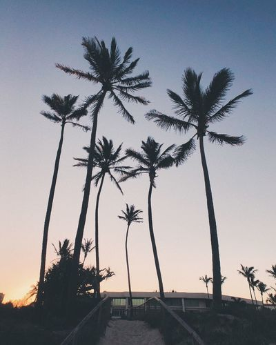 Plant Sky Tree Silhouette Sunset Nature Palm Tree Tropical Climate Low Angle View Beauty In Nature No People Growth Outdoors Scenics - Nature Tall - High Land Dusk Tranquility Tranquil Scene Clear Sky