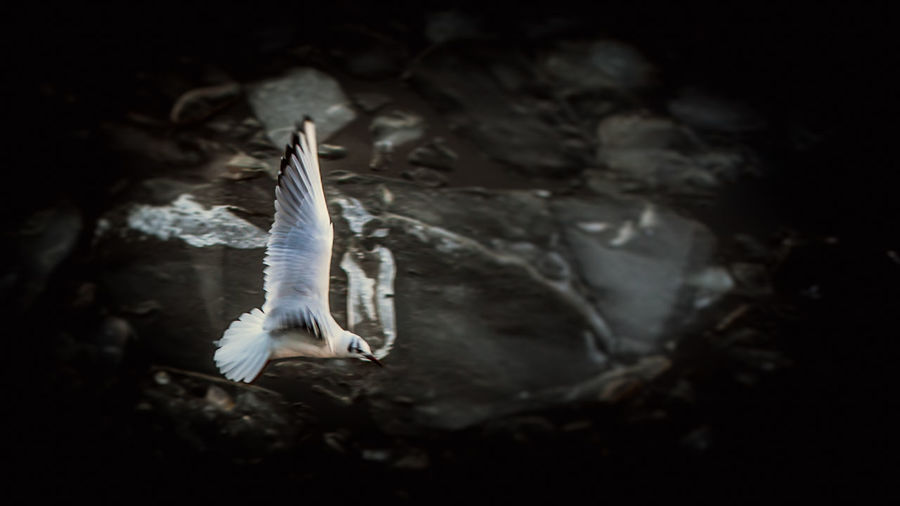 Close-up of swan flying over water
