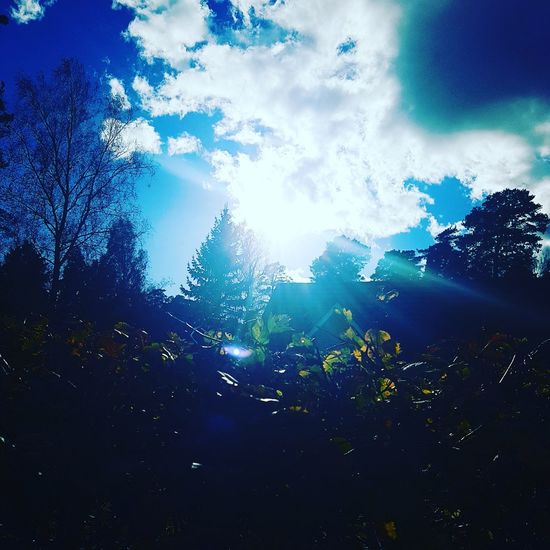 likeforlike #likemyphoto #qlikemyphotos #like4like #likemypic #likeback #ilikeback #10likes #50likes #100likes 20likes likere Nature Outline Low Angle View Blue Sunbeam Cloud Beauty In Nature Cloud - Sky Sky Nature Scenics Growth Sun Outdoors Tranquility Back Lit High Section Tranquil Scene Majestic Lens Flare Day First Eyeem Photo Check This Out A Beautiful Life