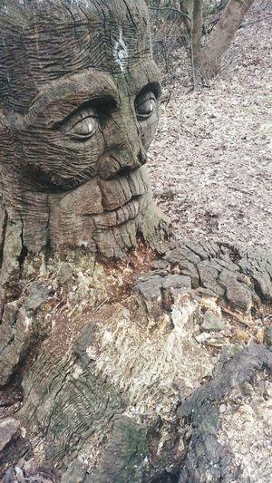 Woodsculpture Sculpture Wood Park Austin Austin Texas Strange