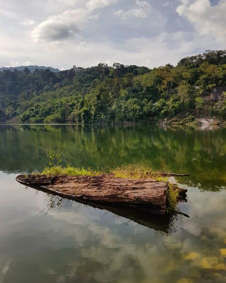 The environment of the dam in Thailand Barrage Dam Mountain Trees Wood Decaying Wood Log Water Dam Environment Grass Outdoor Forest Green Reflection Lake Pinaceae Water Cloud - Sky No People Sky Landscape Tree Nature Outdoors Mountain Beauty In Nature An Eye For Travel EyeEmNewHere