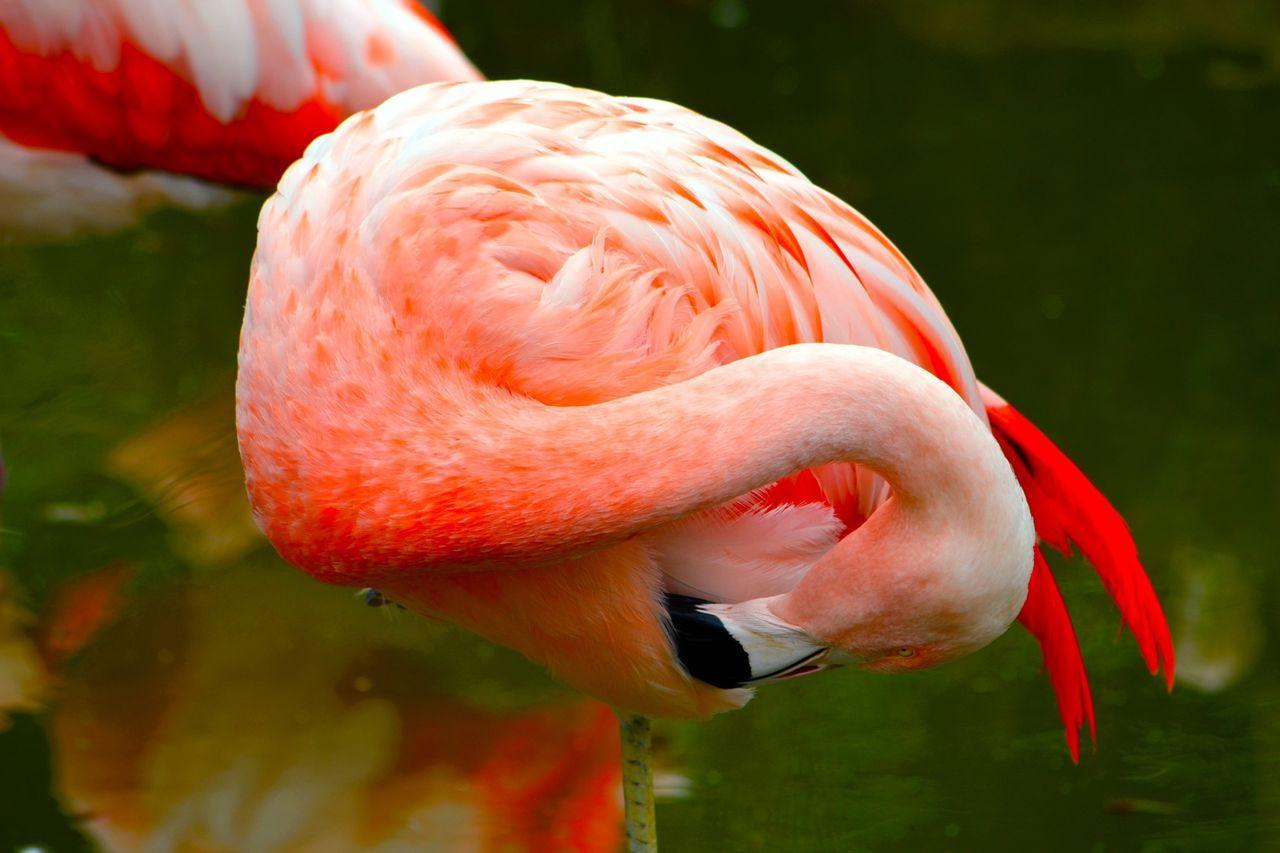 Close-Up View Of Flamingos
